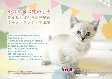 ミルク猫ボランティア募集